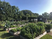 Magnolia Community Garden