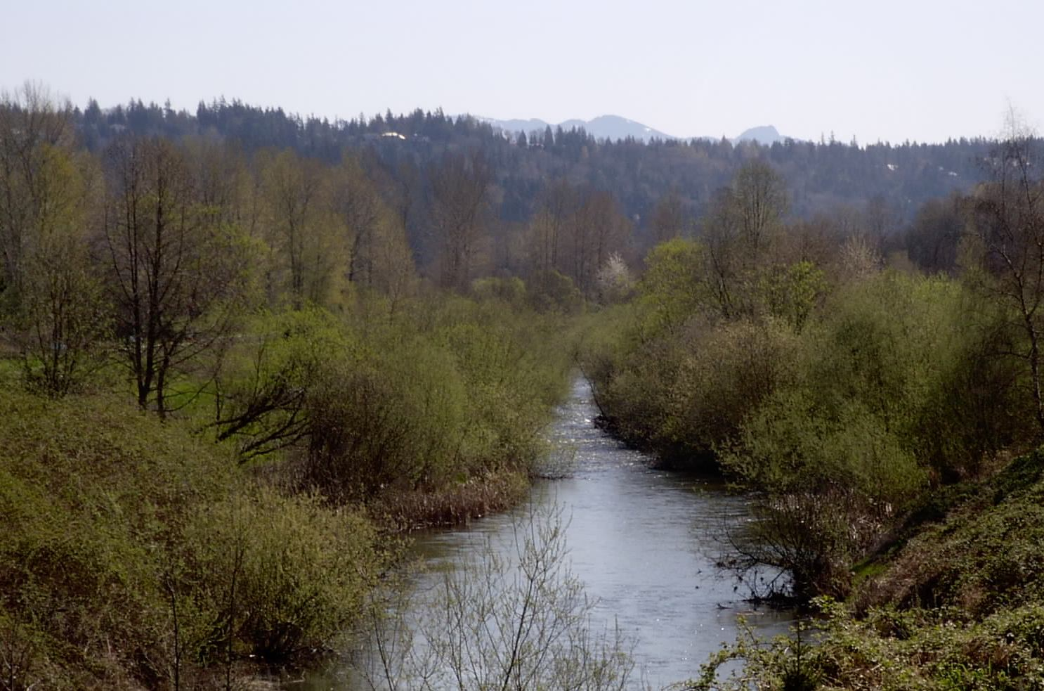 Sammamish River's Transition Zone