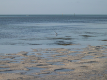 Low tide at Anne's beach Lower Matecumbe Key