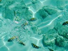 Alligator Reef