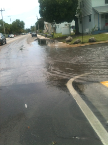 1st Street & Vivian St. one block off N. Roosevelt Blvd in Key West, Wednesday Oct 9, late morning.