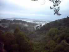 Redwood Regional Preserve