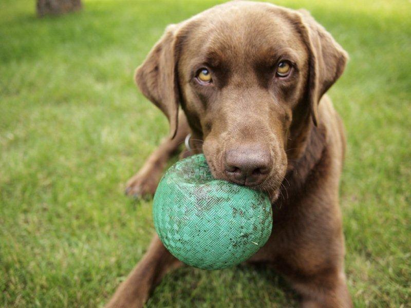 Dog Play Area Survey