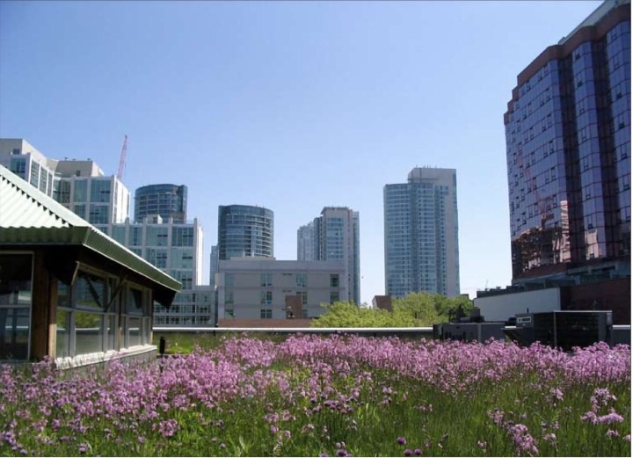 Incorporating green roofs on buildings in San Antonio can be functional and beautiful.