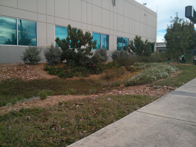 Rain garden for on-site storm water management.