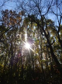 The woods near the bike path