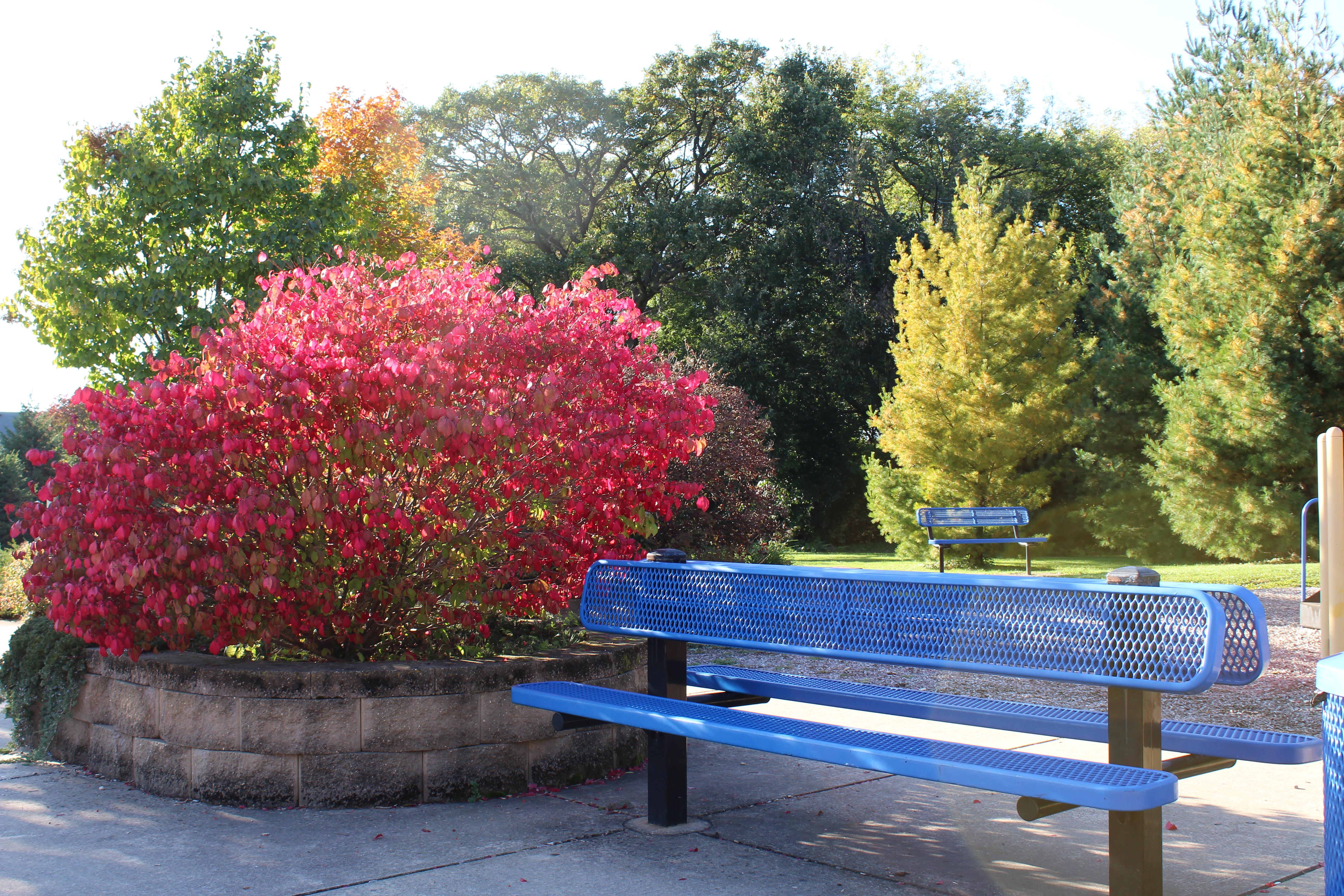 Sheehan Park Master Plan:  Community Recreation Center